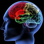 記憶の仕組みと復習の重要性
